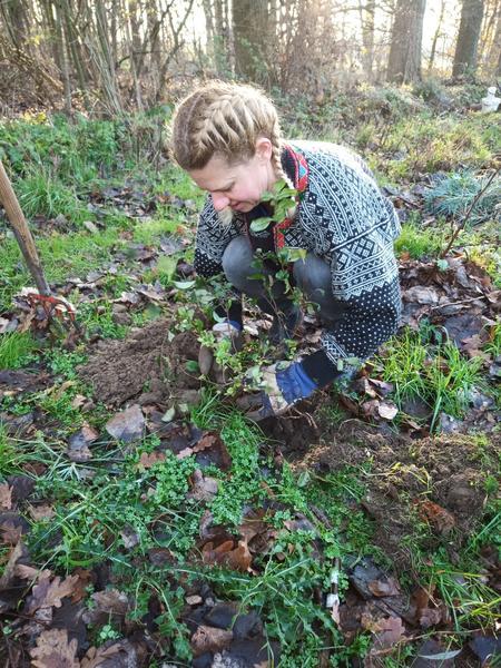 Tamara plant gehurkt, zeer voorzichtig een struikje